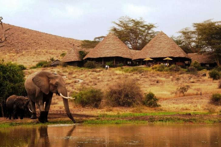 elephant and rondawels