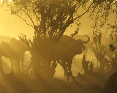Highlights from Ghoha Hills, Botswana