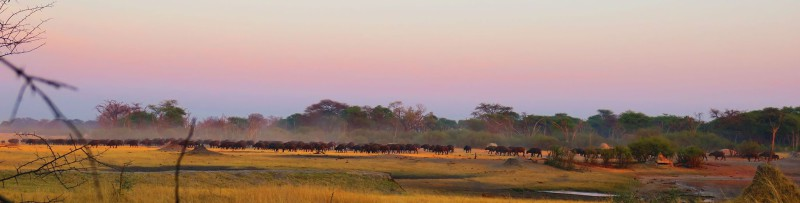 Buffs at the waterhole -Feb 2016